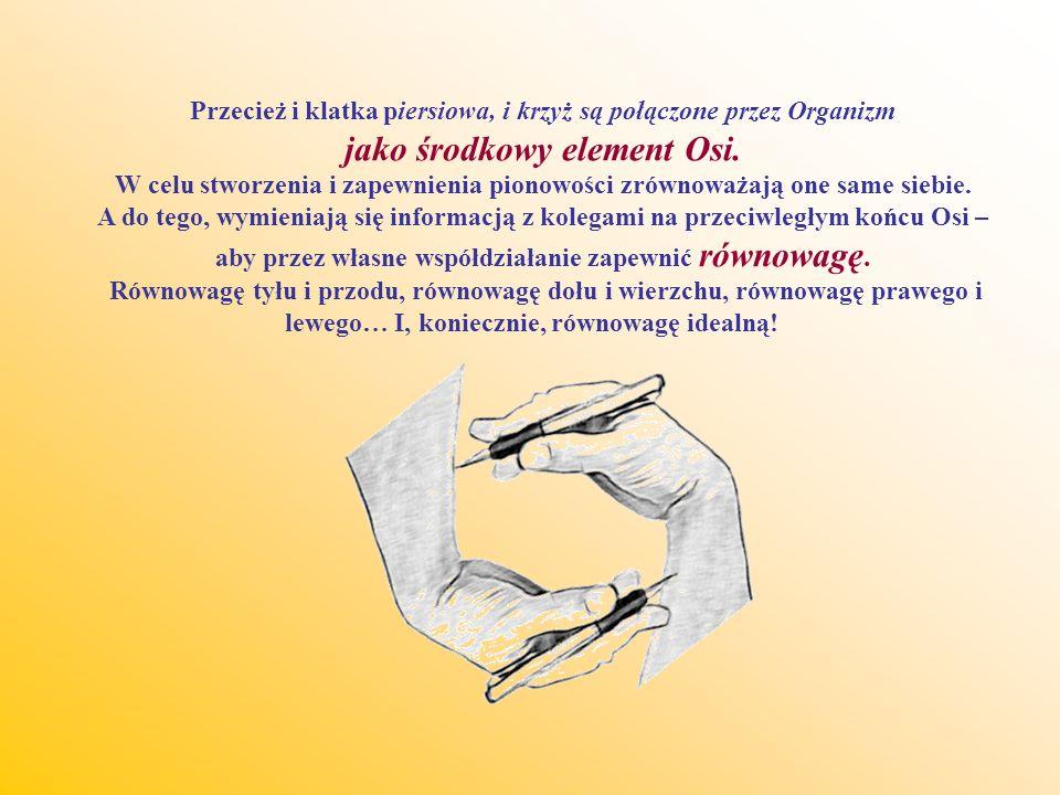 Przecież i klatka piersiowa, i krzyż są połączone przez Organizm jako środkowy element Osi.