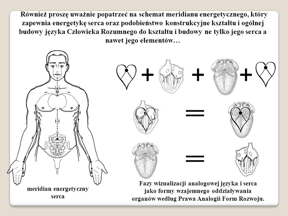 Również proszę uważnie popatrzeć na schemat meridianu energetycznego, który zapewnia energetykę serca oraz podobieństwo konstrukcyjne kształtu i ogóln