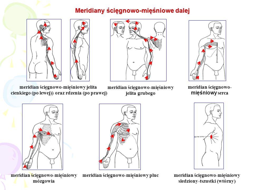 meridian ścięgnowo-mięśniowy jelita cienkiego (po lewej)) oraz rdzenia (po prawej) meridian ścięgnowo-mięśniowy jelita grubego meridian ścięgnowo- mię
