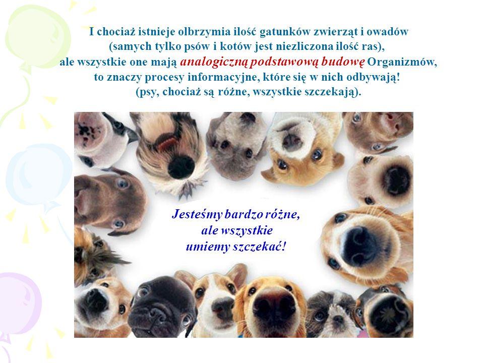 I chociaż istnieje olbrzymia ilość gatunków zwierząt i owadów (samych tylko psów i kotów jest niezliczona ilość ras), ale wszystkie one mają analogicz