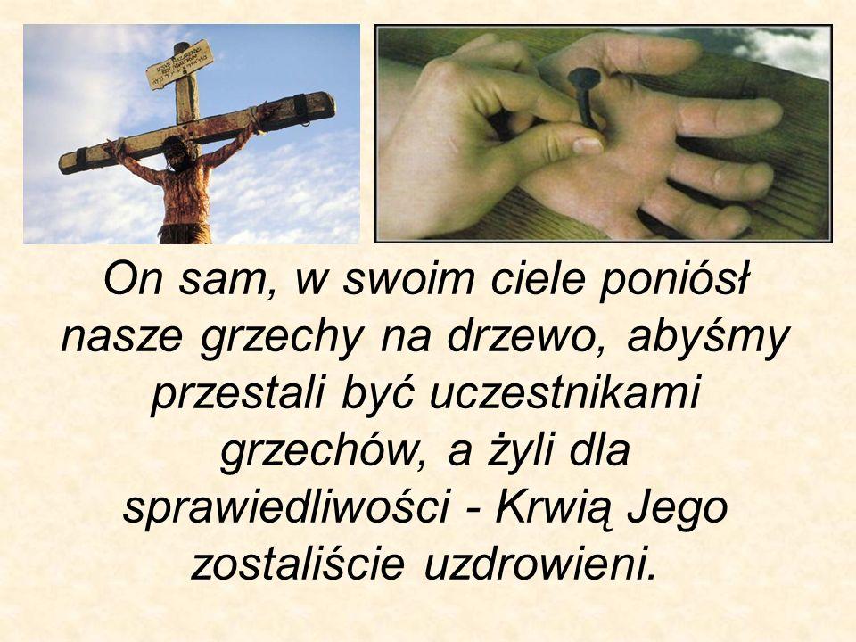 On sam, w swoim ciele poniósł nasze grzechy na drzewo, abyśmy przestali być uczestnikami grzechów, a żyli dla sprawiedliwości - Krwią Jego zostaliście