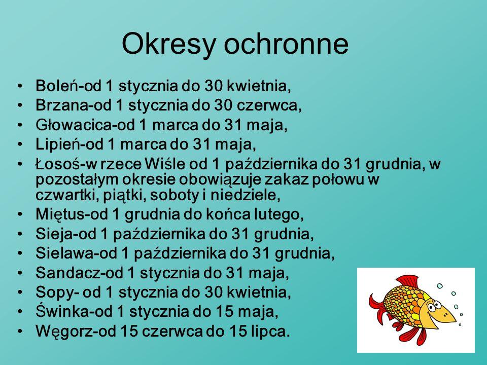 Okresy ochronne Boleń-od 1 stycznia do 30 kwietnia, Brzana-od 1 stycznia do 30 czerwca, Głowacica-od 1 marca do 31 maja, Lipień-od 1 marca do 31 maja,