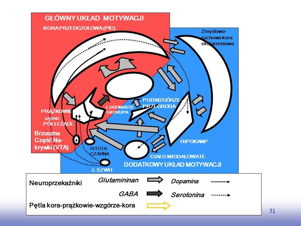 EE141 31 THALAMUS CIAŁO MIGDAŁOWATE HIPOKAMP KORA PRZEDCZOŁOWA (PfC) Brzuszna Część Na- krywki (VTA) ISTOTA CZARNA J. SZWU PRĄŻKOWIE JĄDRO PÓŁLEŻĄCE J
