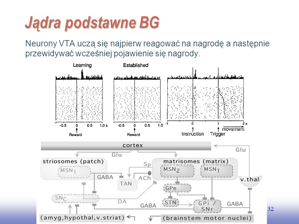 EE141 32 Jądra podstawne BG Neurony VTA uczą się najpierw reagować na nagrodę a następnie przewidywać wcześniej pojawienie się nagrody.