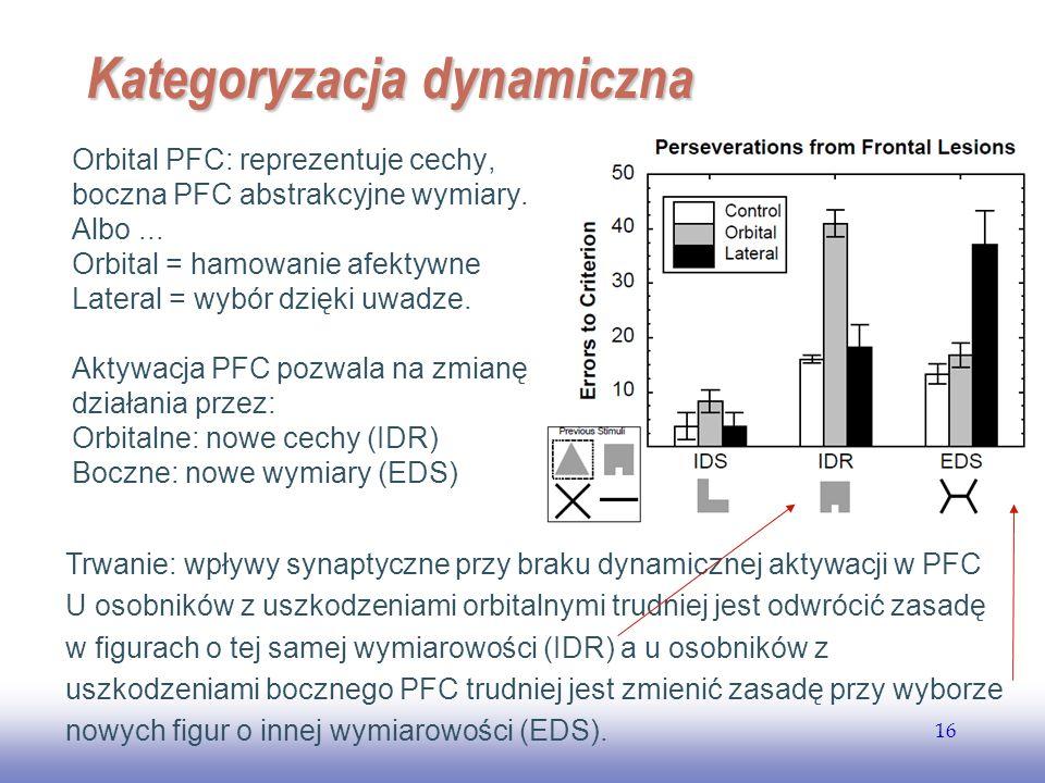 EE141 16 Kategoryzacja dynamiczna Orbital PFC: reprezentuje cechy, boczna PFC abstrakcyjne wymiary. Albo... Orbital = hamowanie afektywne Lateral = wy