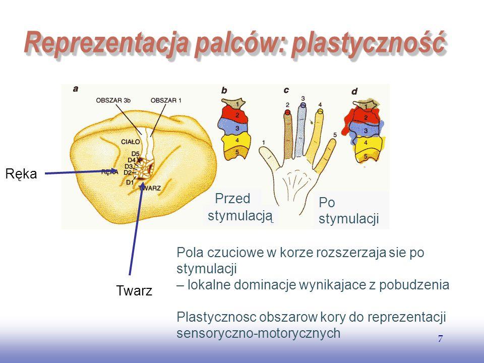 EE141 7 Reprezentacja palców: plastyczność Ręka Twarz Przed Po stymulacji stymulacją Pola czuciowe w korze rozszerzaja sie po stymulacji – lokalne dom