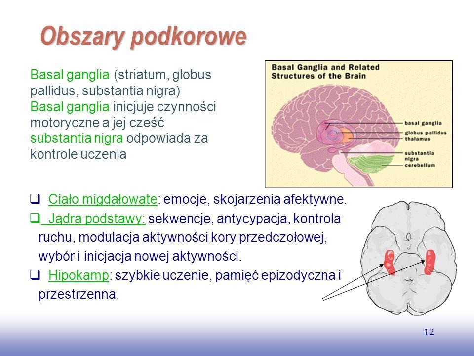 EE141 12 Obszary podkorowe Ciało migdałowate: emocje, skojarzenia afektywne.Ciało migdałowate Jądra podstawy: sekwencje, antycypacja, kontrola ruchu, modulacja aktywności kory przedczołowej, wybór i inicjacja nowej aktywności.