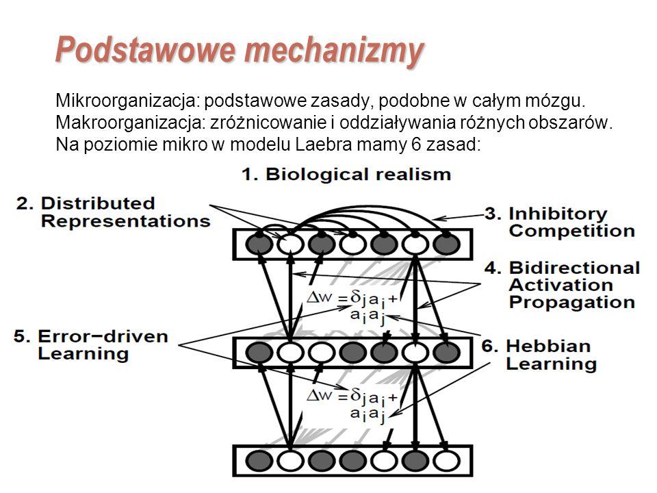 EE141 2 Podstawowe mechanizmy Mikroorganizacja: podstawowe zasady, podobne w całym mózgu. Makroorganizacja: zróżnicowanie i oddziaływania różnych obsz