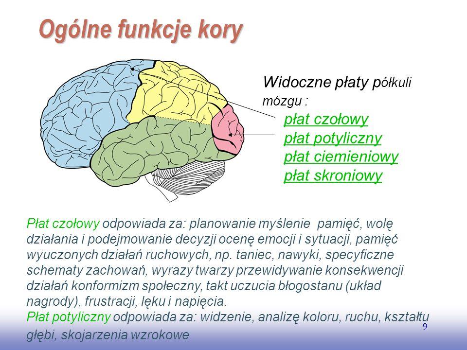 EE141 9 Ogólne funkcje kory Widoczne płaty p ółkuli mózgu : płat czołowy płat potyliczny płat ciemieniowy płat skroniowy Płat czołowy odpowiada za: planowanie myślenie pamięć, wolę działania i podejmowanie decyzji ocenę emocji i sytuacji, pamięć wyuczonych działań ruchowych, np.