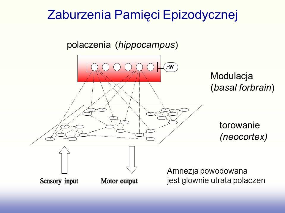 Zaburzenia Pamięci Epizodycznej torowanie (neocortex) Modulacja (basal forbrain) polaczenia (hippocampus) Amnezja powodowana jest glownie utrata polac