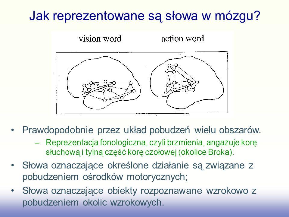Jak reprezentowane są słowa w mózgu? Prawdopodobnie przez układ pobudzeń wielu obszarów. –Reprezentacja fonologiczna, czyli brzmienia, angażuje korę s