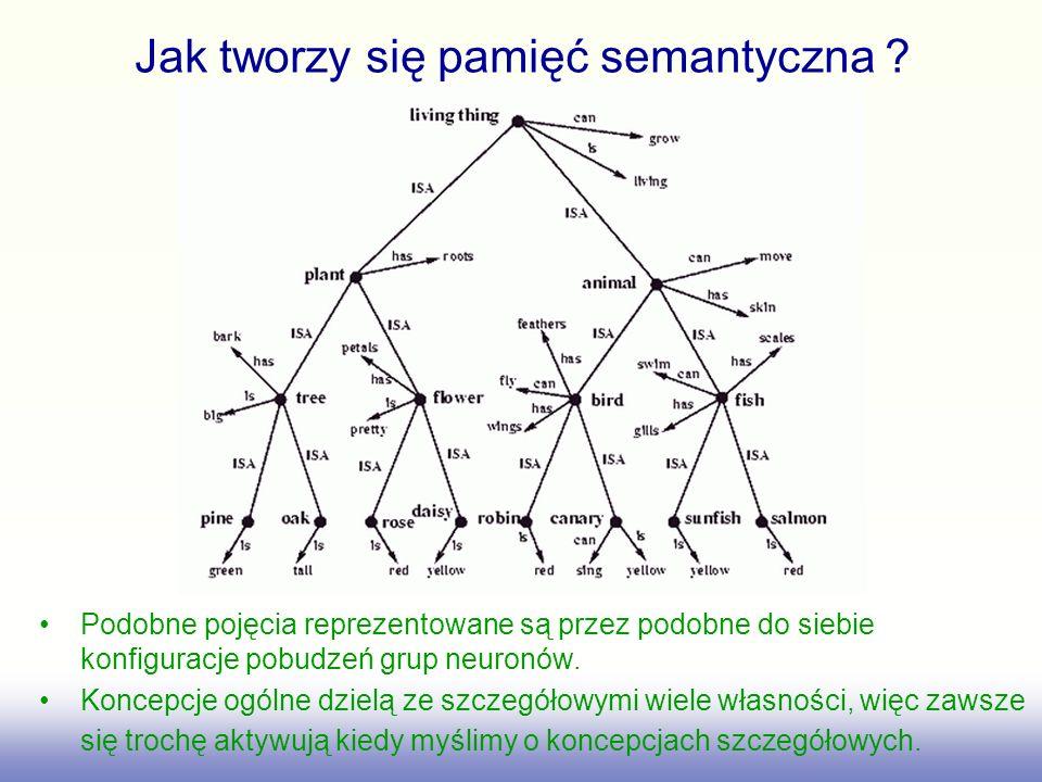 Jak tworzy się pamięć semantyczna ? Podobne pojęcia reprezentowane są przez podobne do siebie konfiguracje pobudzeń grup neuronów. Koncepcje ogólne dz