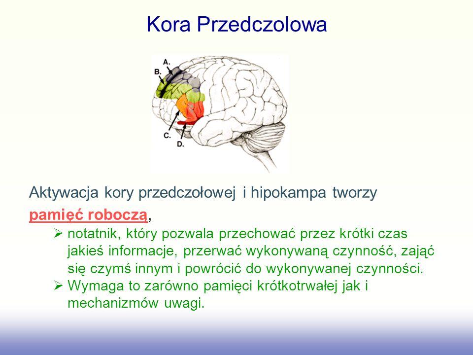 Kora Przedczolowa Aktywacja kory przedczołowej i hipokampa tworzy pamięć robocząpamięć roboczą, notatnik, który pozwala przechować przez krótki czas j