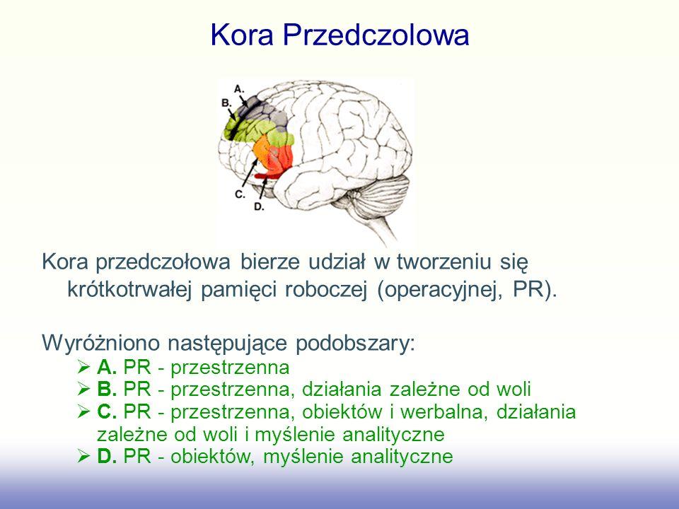 Kora Przedczolowa Kora przedczołowa bierze udział w tworzeniu się krótkotrwałej pamięci roboczej (operacyjnej, PR). Wyróżniono następujące podobszary: