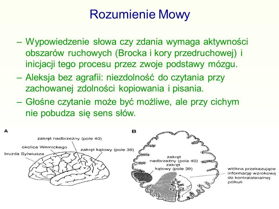 Rozumienie Mowy –Wypowiedzenie słowa czy zdania wymaga aktywności obszarów ruchowych (Brocka i kory przedruchowej) i inicjacji tego procesu przez zwoj