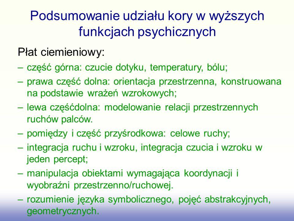 Podsumowanie udziału kory w wyższych funkcjach psychicznych Płat ciemieniowy: –część górna: czucie dotyku, temperatury, bólu; –prawa część dolna: orie