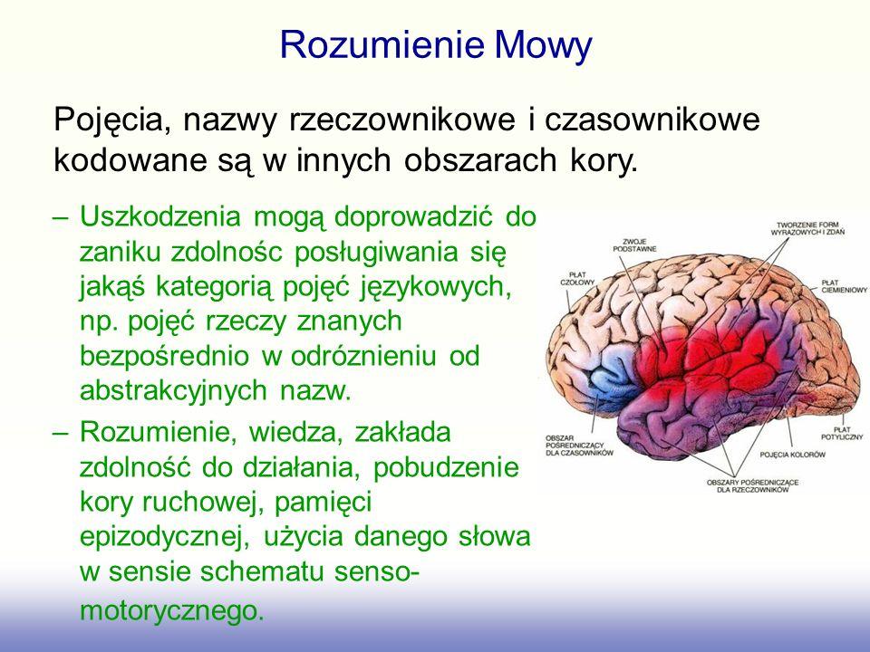 Rozumienie Mowy –Uszkodzenia mogą doprowadzić do zaniku zdolnośc posługiwania się jakąś kategorią pojęć językowych, np. pojęć rzeczy znanych bezpośred