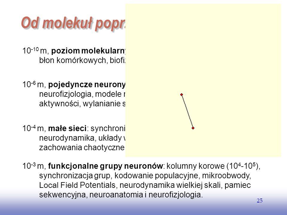 EE141 25 Od molekuł poprzez sieci neuronow... 10 -10 m, poziom molekularny: kanały jonowe, synapsy, własności błon komórkowych, biofizyka, neurochemia