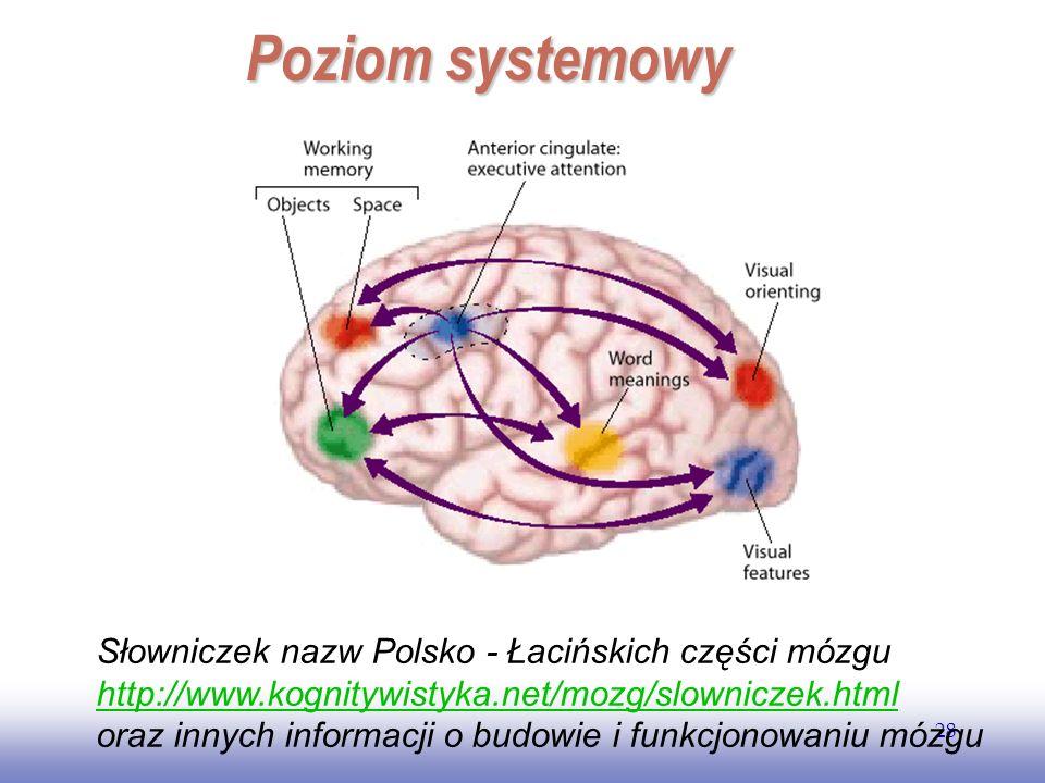EE141 28 Poziom systemowy Słowniczek nazw Polsko - Łacińskich części mózgu http://www.kognitywistyka.net/mozg/slowniczek.html oraz innych informacji o