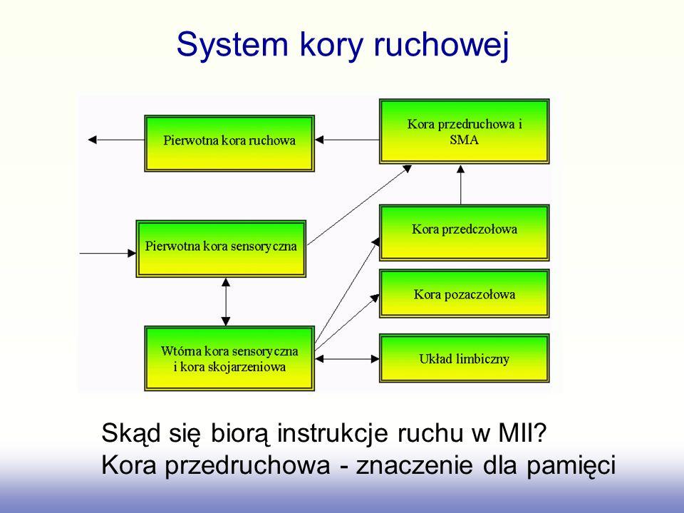 System kory ruchowej Skąd się biorą instrukcje ruchu w MII? Kora przedruchowa - znaczenie dla pamięci