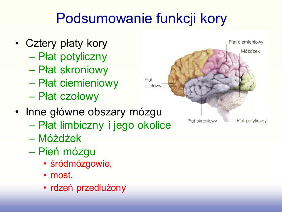 Podsumowanie funkcji kory Cztery płaty kory –Płat potyliczny –Płat skroniowy –Płat ciemieniowy –Płat czołowy Inne główne obszary mózgu –Płat limbiczny