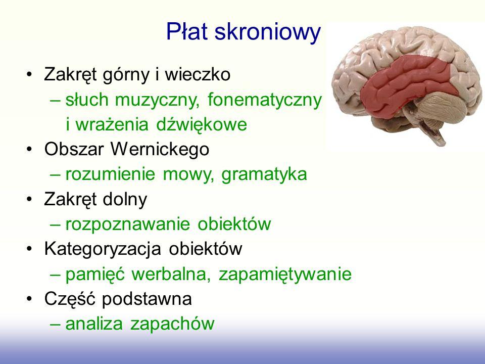 Zakręt górny i wieczko –słuch muzyczny, fonematyczny i wrażenia dźwiękowe Obszar Wernickego –rozumienie mowy, gramatyka Zakręt dolny –rozpoznawanie ob