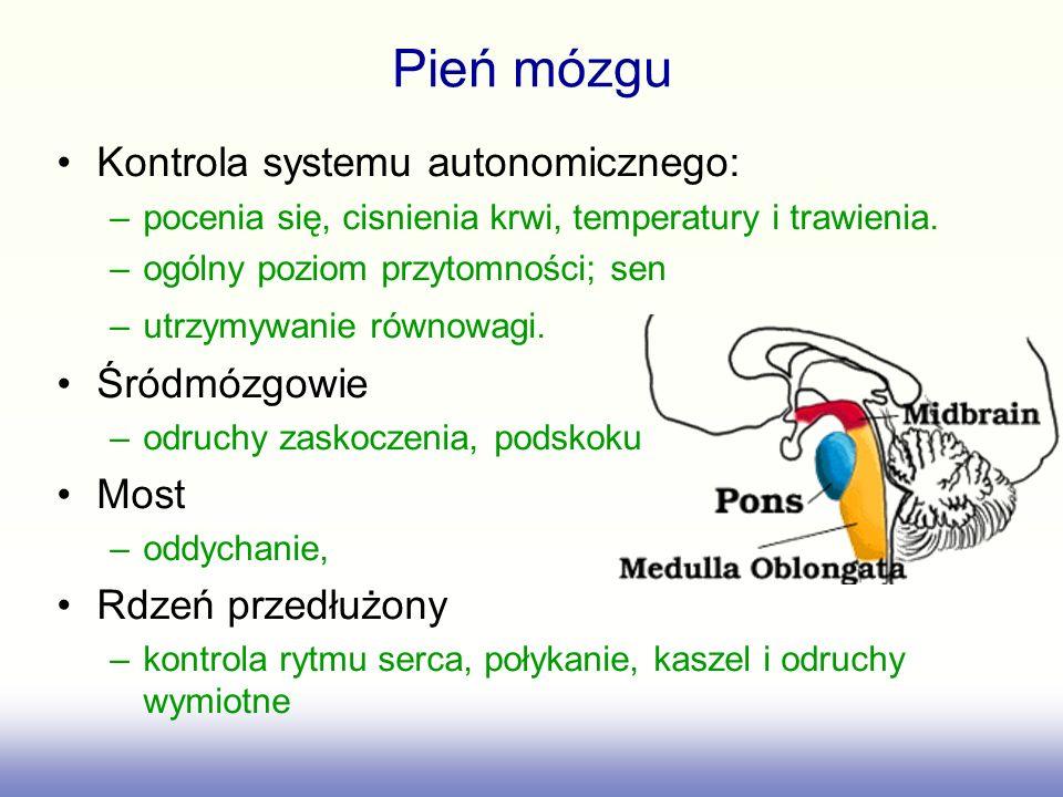 Kontrola systemu autonomicznego: –pocenia się, cisnienia krwi, temperatury i trawienia. –ogólny poziom przytomności; sen –utrzymywanie równowagi. Śród