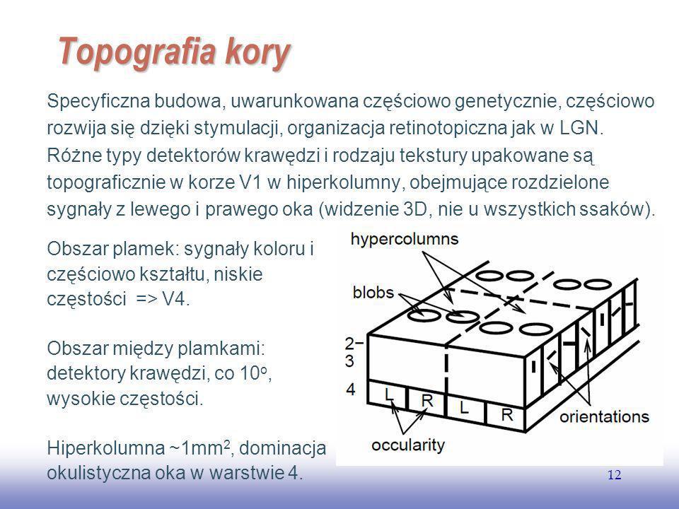EE141 12 Topografia kory Specyficzna budowa, uwarunkowana częściowo genetycznie, częściowo rozwija się dzięki stymulacji, organizacja retinotopiczna jak w LGN.