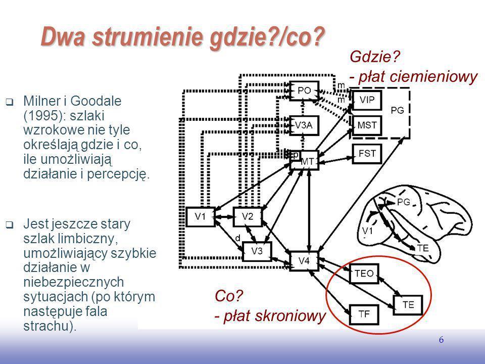 EE141 7 Dwa strumienie Ungerleider i Mishkin (1982): istnieją dwa w znacznej mierze rozdzielone szlaki przetwarzania informacji wzrokowej, biegnącej już od oka.
