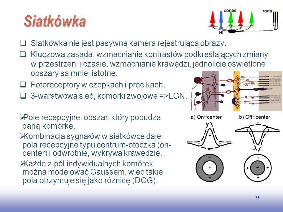EE141 9 Siatkówka Siatkówka nie jest pasywną kamera rejestrującą obrazy.