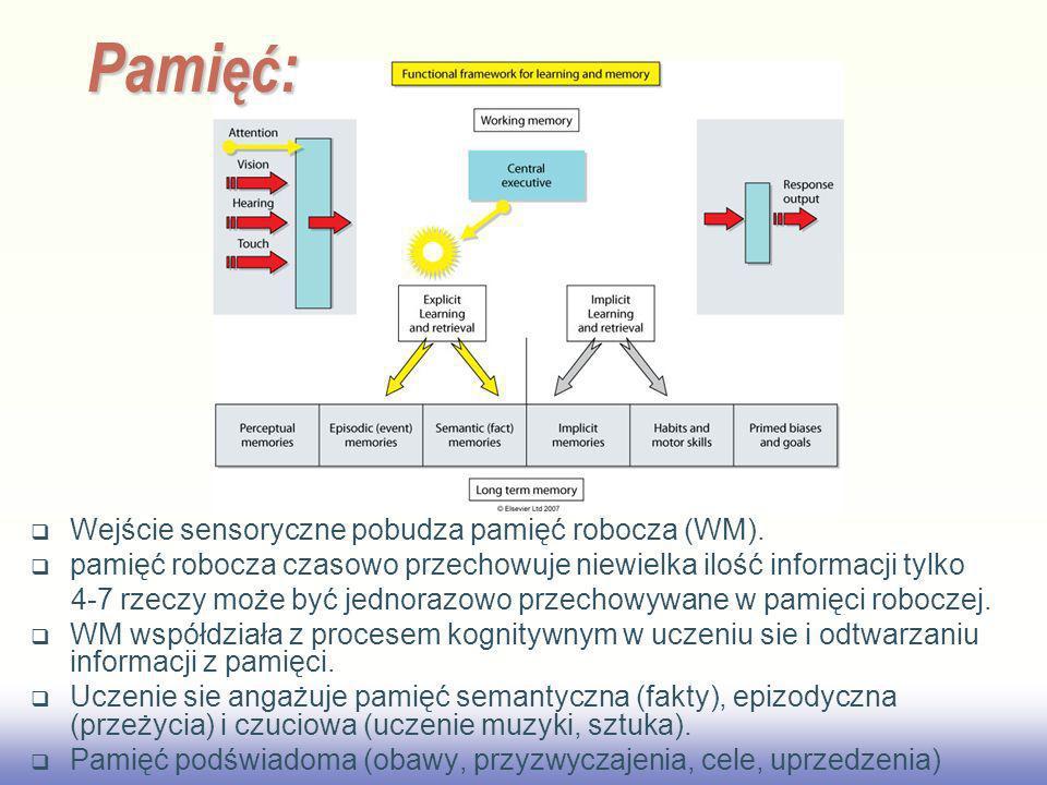 EE141 Wejście sensoryczne pobudza pamięć robocza (WM). pamięć robocza czasowo przechowuje niewielka ilość informacji tylko 4-7 rzeczy może być jednora
