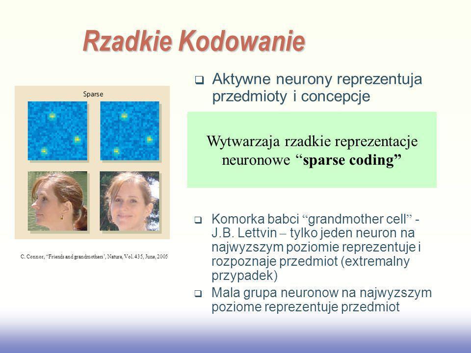 EE141 Rzadkie Kodowanie Aktywne neurony reprezentuja przedmioty i concepcje C. Connor, Friends and grandmothers, Nature, Vol. 435, June, 2005 Neurons
