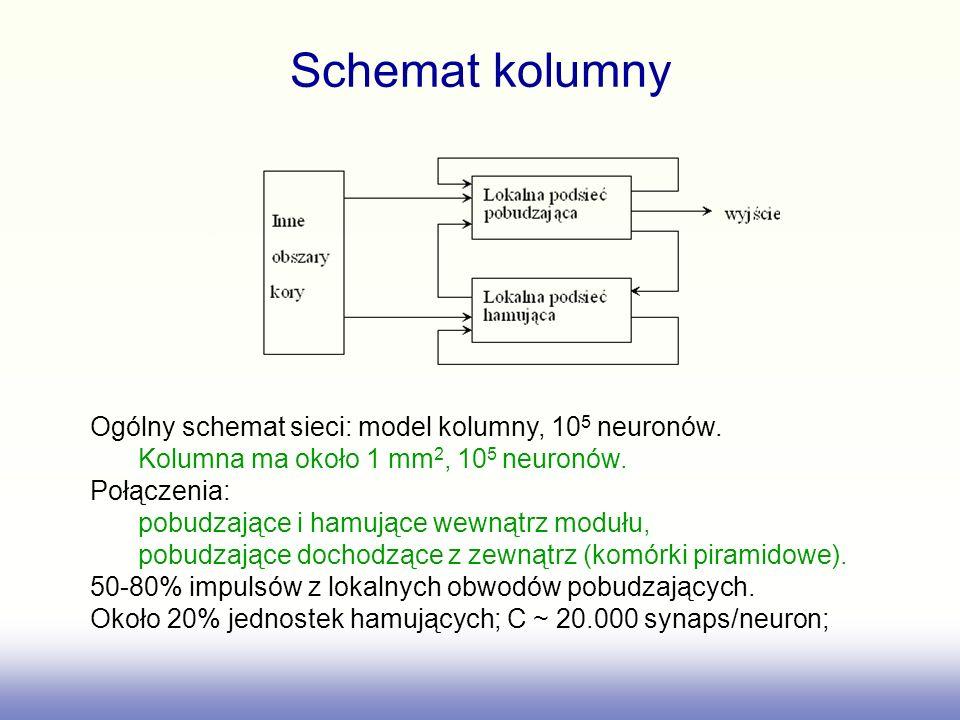Schemat kolumny Ogólny schemat sieci: model kolumny, 10 5 neuronów. Kolumna ma około 1 mm 2, 10 5 neuronów. Połączenia: pobudzające i hamujące wewnątr