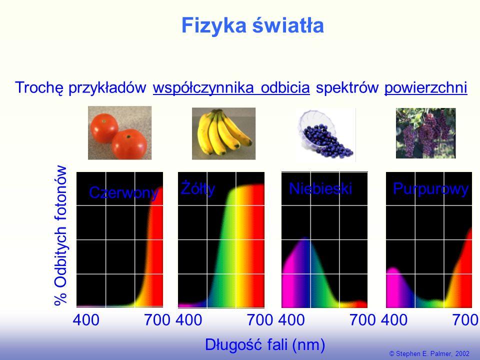 Fizyka światła Troche przykładów spektrów źródeł światła. © Stephen E. Palmer, 2002