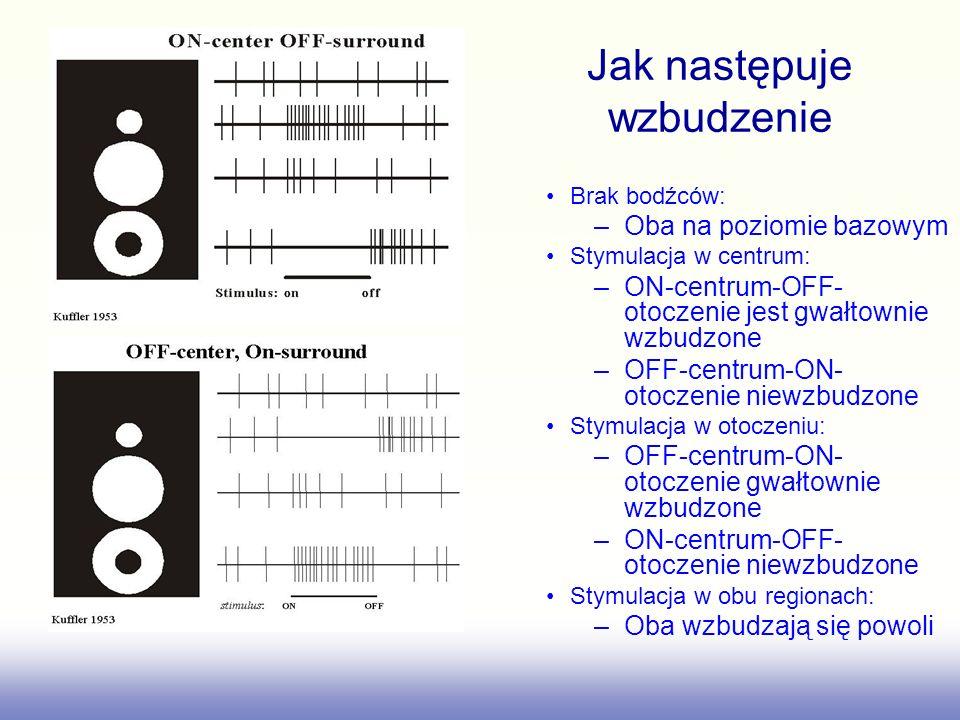 David Hubel & Torsten Wiesel http://www.physiology.wisc.edu/yin/public/ on-center cell