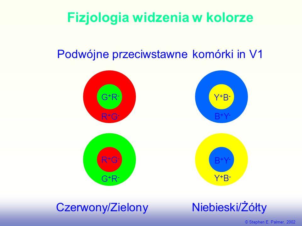 Nicholls 21.10 Podatne pole zorganizowanych reagujących na kolor drobno-komórkowych neuronów w małpich LGN.