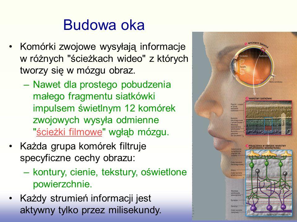 Projekcje z siatkówki oka do wzrokowych obsza- rów wzgórza (LGN), śródmózgowia oraz głównej kory wzrokowej Kandel 23-4 Postrzegana informacja wzrokowa Odbicia źrenic ruchy oka