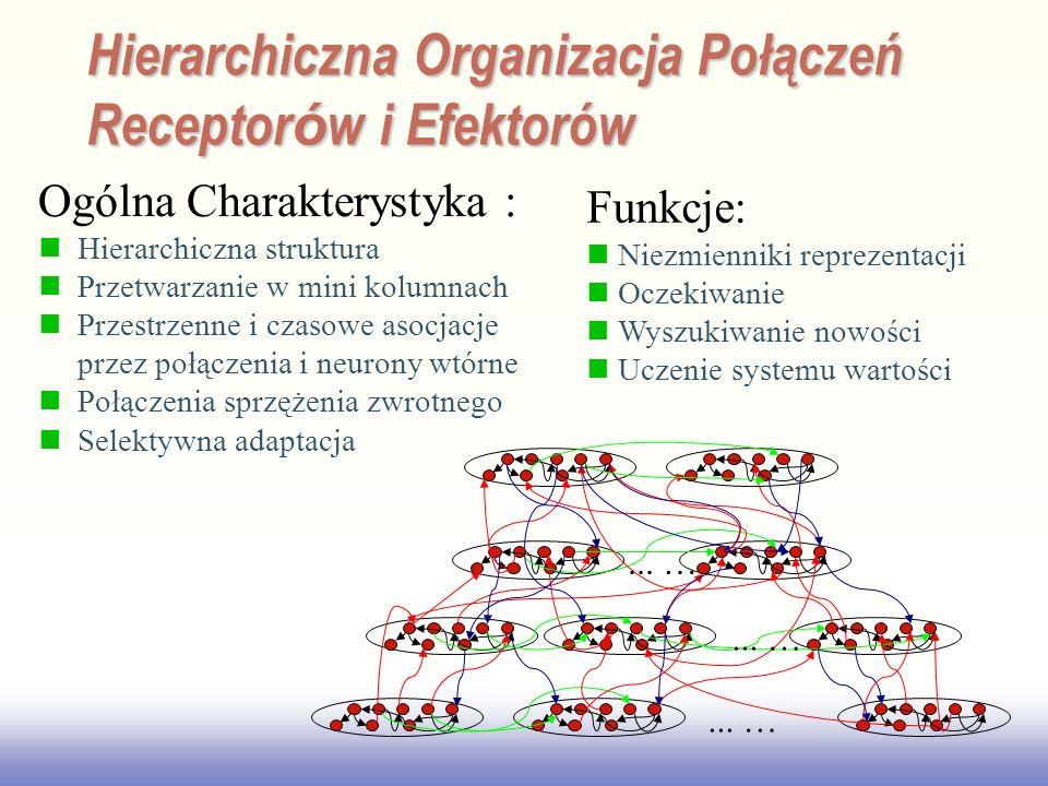 EE141 Ogólna Charakterystyka : Hierarchiczna struktura Przetwarzanie w mini kolumnach Przestrzenne i czasowe asocjacje przez połączenia i neurony wtórne Połączenia sprzężenia zwrotnego Selektywna adaptacja Funkcje: Niezmienniki reprezentacji Oczekiwanie Wyszukiwanie nowości Uczenie systemu wartości Hierarchiczna Organizacja Połączeń Receptor ó w i Efektorów