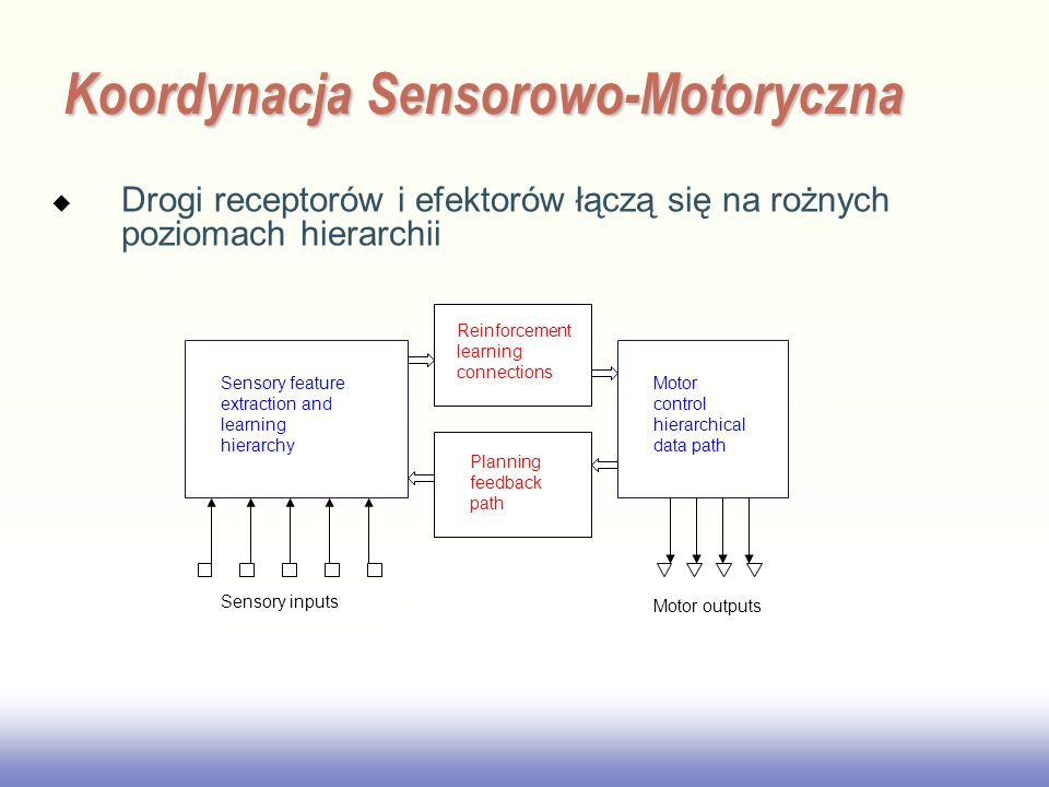 EE141 Drogi receptorów i efektorów łączą się na rożnych poziomach hierarchii Koordynacja Sensorowo-Motoryczna Motor control hierarchical data path Sen