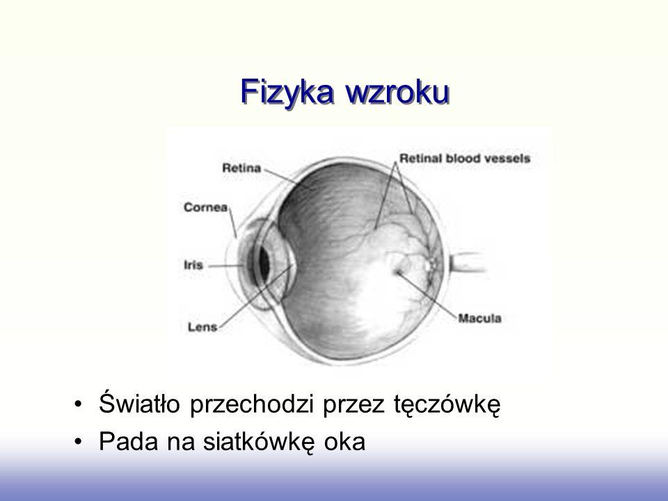 Fizyka wzroku Światło przechodzi przez tęczówkę Pada na siatkówkę oka