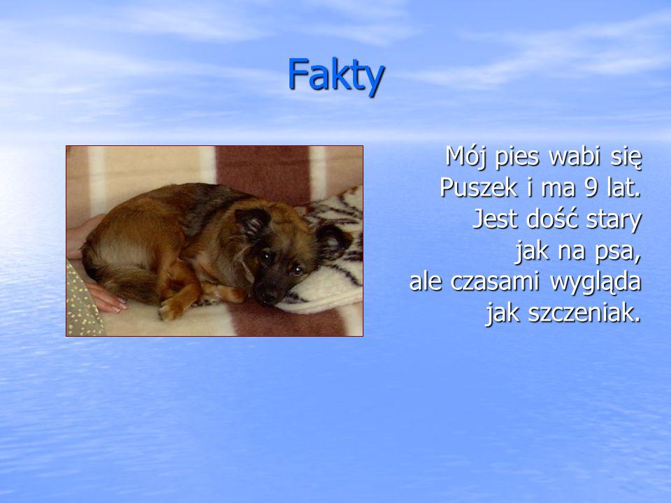 Fakty Mój pies wabi się Puszek i ma 9 lat. Jest dość stary jak na psa, ale czasami wygląda jak szczeniak.