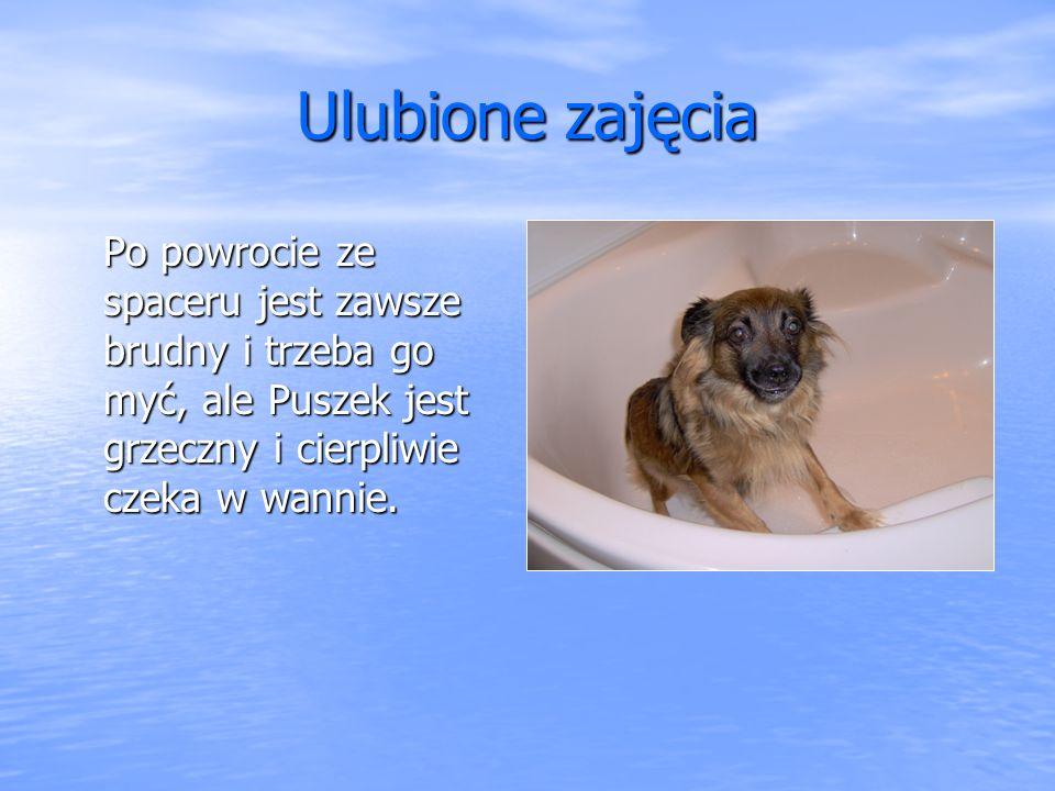 Po kąpieli wraca do tego co lubi robić najbardziej To jest mój pies.