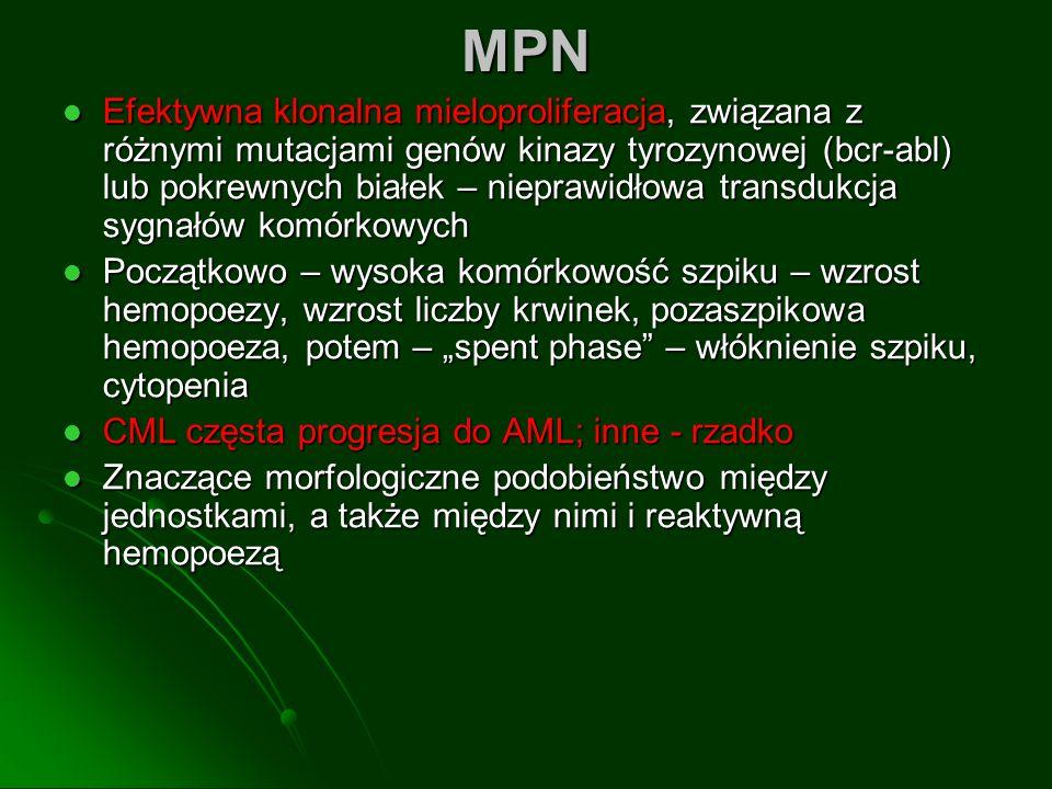 MPN Efektywna klonalna mieloproliferacja, związana z różnymi mutacjami genów kinazy tyrozynowej (bcr-abl) lub pokrewnych białek – nieprawidłowa transdukcja sygnałów komórkowych Efektywna klonalna mieloproliferacja, związana z różnymi mutacjami genów kinazy tyrozynowej (bcr-abl) lub pokrewnych białek – nieprawidłowa transdukcja sygnałów komórkowych Początkowo – wysoka komórkowość szpiku – wzrost hemopoezy, wzrost liczby krwinek, pozaszpikowa hemopoeza, potem – spent phase – włóknienie szpiku, cytopenia Początkowo – wysoka komórkowość szpiku – wzrost hemopoezy, wzrost liczby krwinek, pozaszpikowa hemopoeza, potem – spent phase – włóknienie szpiku, cytopenia CML częsta progresja do AML; inne - rzadko CML częsta progresja do AML; inne - rzadko Znaczące morfologiczne podobieństwo między jednostkami, a także między nimi i reaktywną hemopoezą Znaczące morfologiczne podobieństwo między jednostkami, a także między nimi i reaktywną hemopoezą