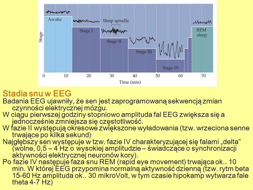 Stadia snu w EEG Badania EEG ujawniły, że sen jest zaprogramowaną sekwencją zmian czynności elektrycznej mózgu. W ciągu pierwszej godziny stopniowo am