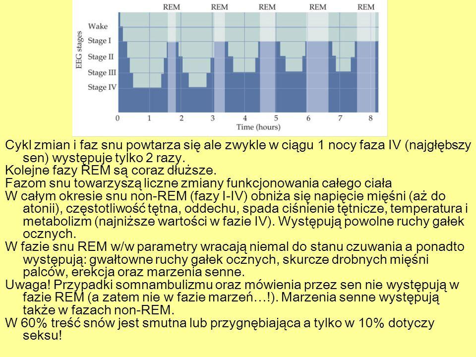 Cykl zmian i faz snu powtarza się ale zwykle w ciągu 1 nocy faza IV (najgłębszy sen) występuje tylko 2 razy. Kolejne fazy REM są coraz dłuższe. Fazom