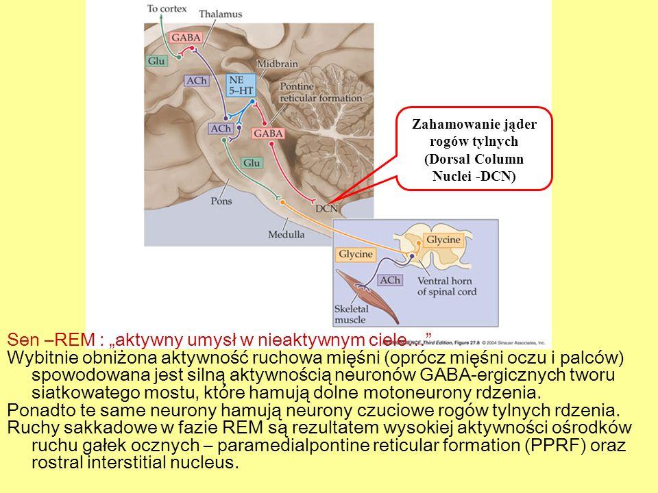 Sen –REM : aktywny umysł w nieaktywnym ciele… Wybitnie obniżona aktywność ruchowa mięśni (oprócz mięśni oczu i palców) spowodowana jest silną aktywnoś