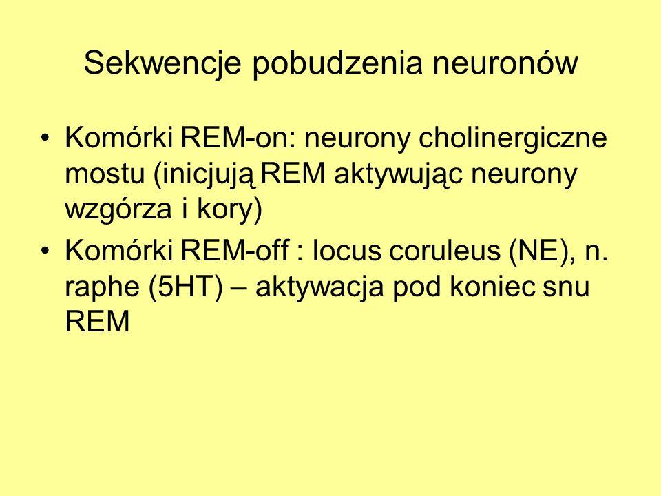 Sekwencje pobudzenia neuronów Komórki REM-on: neurony cholinergiczne mostu (inicjują REM aktywując neurony wzgórza i kory) Komórki REM-off : locus cor
