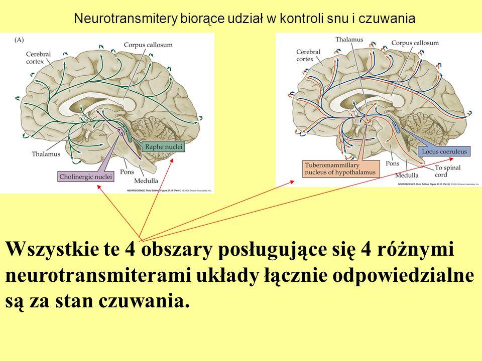 Neurotransmitery biorące udział w kontroli snu i czuwania Wszystkie te 4 obszary posługujące się 4 różnymi neurotransmiterami układy łącznie odpowiedz
