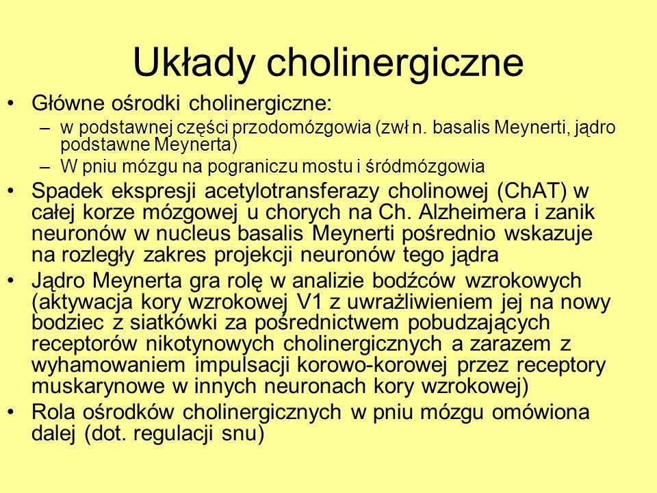 Układy cholinergiczne Główne ośrodki cholinergiczne: –w podstawnej części przodomózgowia (zwł n. basalis Meynerti, jądro podstawne Meynerta) –W pniu m