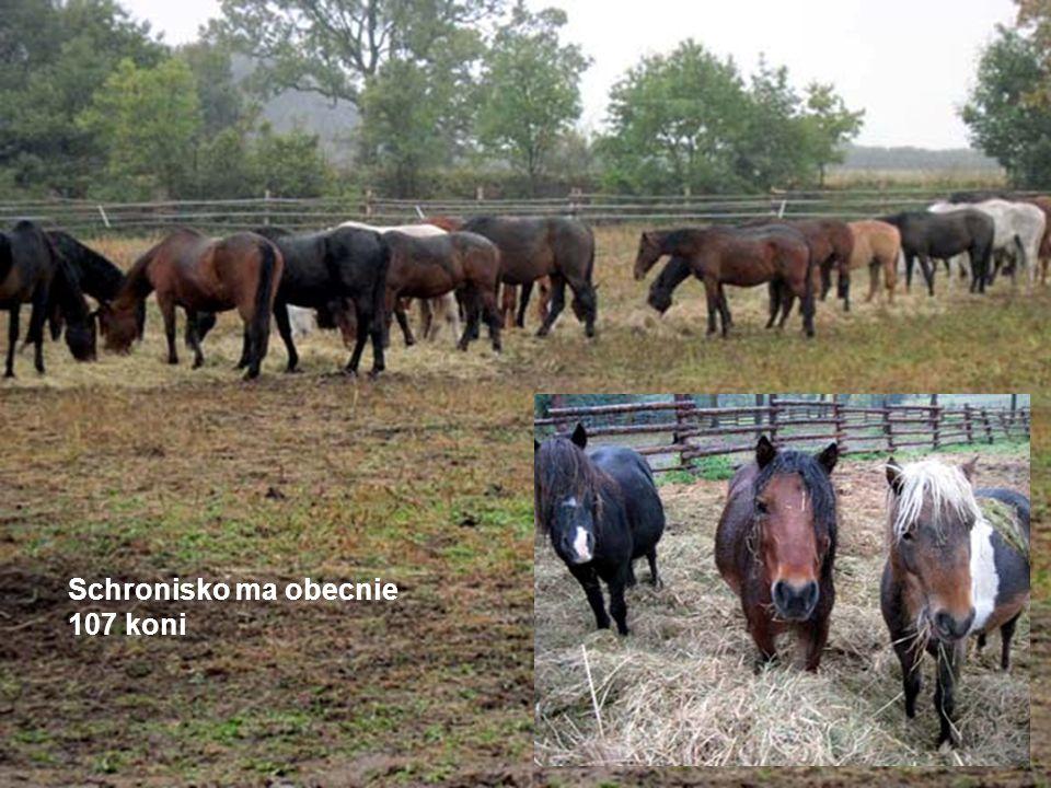 Schronisko ma obecnie 107 koni